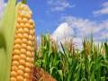 نظرة أعمق حول تداولات الذرة
