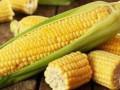 اسعار السلع والذرة يرتد بشكل عابر من جديد
