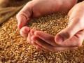 أسعار السلع والتراجعات تخيم علي تداولات عقود القمح
