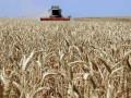 تداولات السلع و توقعاتنا تشير الى استمرار تعافي القمح