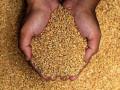 تداولات السلع وحالة من الترقب تنتظر أسعار القمح