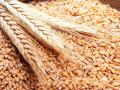 البورصة العالمية ومزيدا من التفاصيل حول تداولات القمح