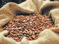تداولات السلع تشير وبقوة الى تراجعات الكاكاو