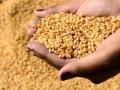 البورصة العالمية والضبابية تسيطر علي تداولات القمح الأمريكي