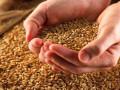 عقود القمح تتصدر أسعار السلع