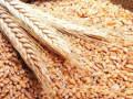 تداولات السلع واسعار الذرة تختبر دعما حيويا للغاية