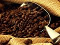 Coffe تشهد تراجعات قياسية و الهبوط سمة غالبة